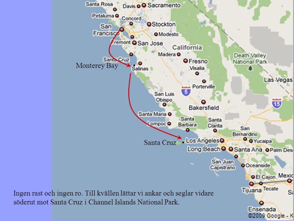 Monterey Bay • Santa Cruz • Ingen rast och ingen ro.