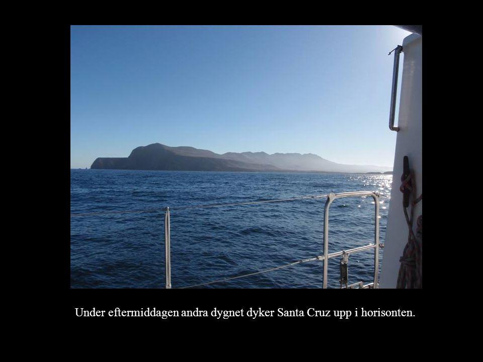 Under eftermiddagen andra dygnet dyker Santa Cruz upp i horisonten.