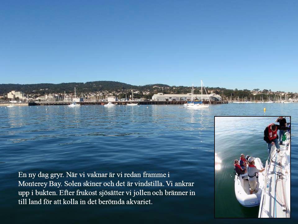 En ny dag gryr. När vi vaknar är vi redan framme i Monterey Bay.