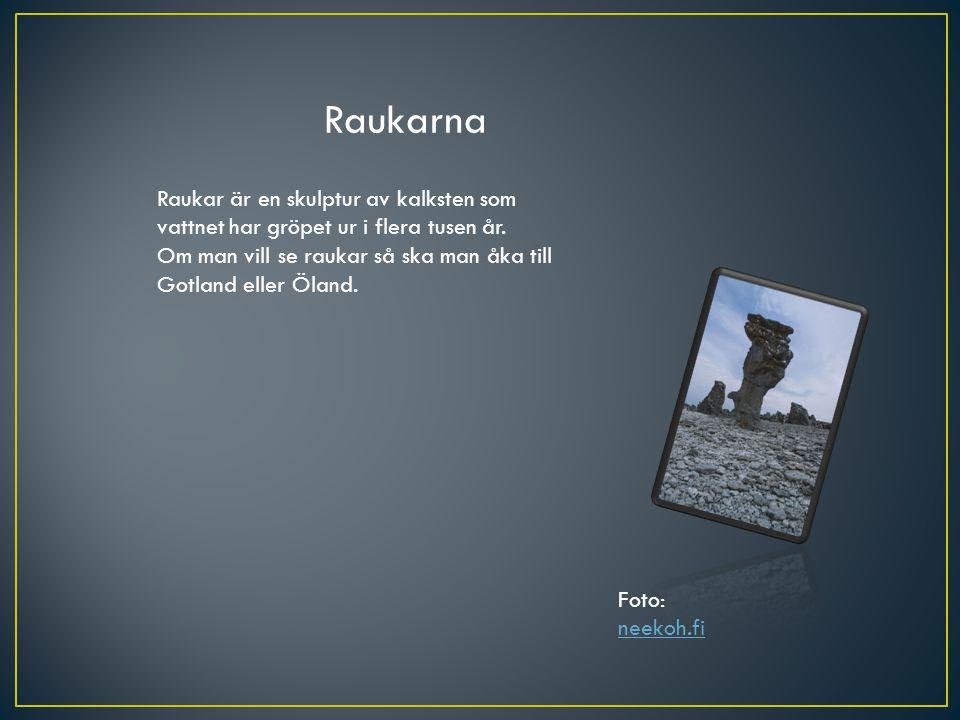 Raukarna Raukar är en skulptur av kalksten som vattnet har gröpet ur i flera tusen år. Om man vill se raukar så ska man åka till Gotland eller Öland.