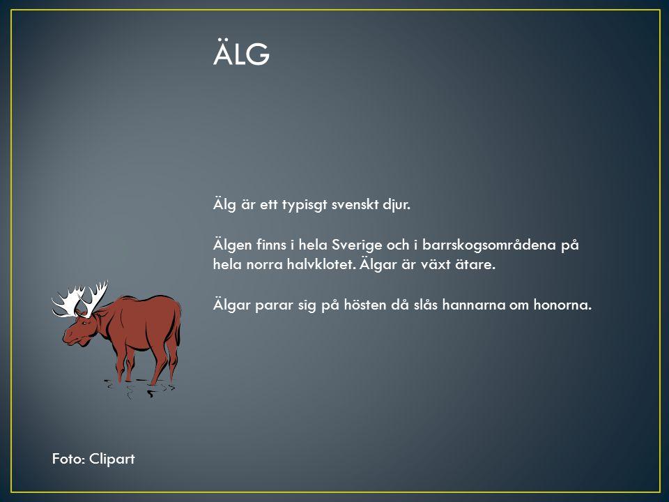 ÄLG Älg är ett typisgt svenskt djur. Älgen finns i hela Sverige och i barrskogsområdena på hela norra halvklotet. Älgar är växt ätare. Älgar parar sig