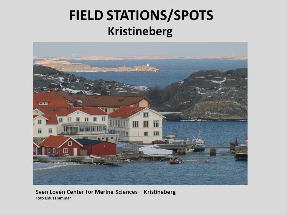 FIELD STATIONS/SPOTS Kristineberg Sven Lovén Center for Marine Sciences – Kristineberg Foto Linus Hammar