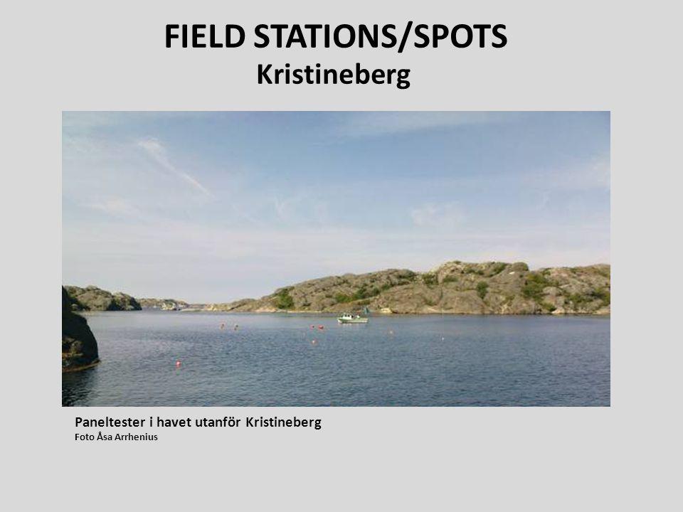 Paneltester i havet utanför Kristineberg Foto Åsa Arrhenius FIELD STATIONS/SPOTS Kristineberg
