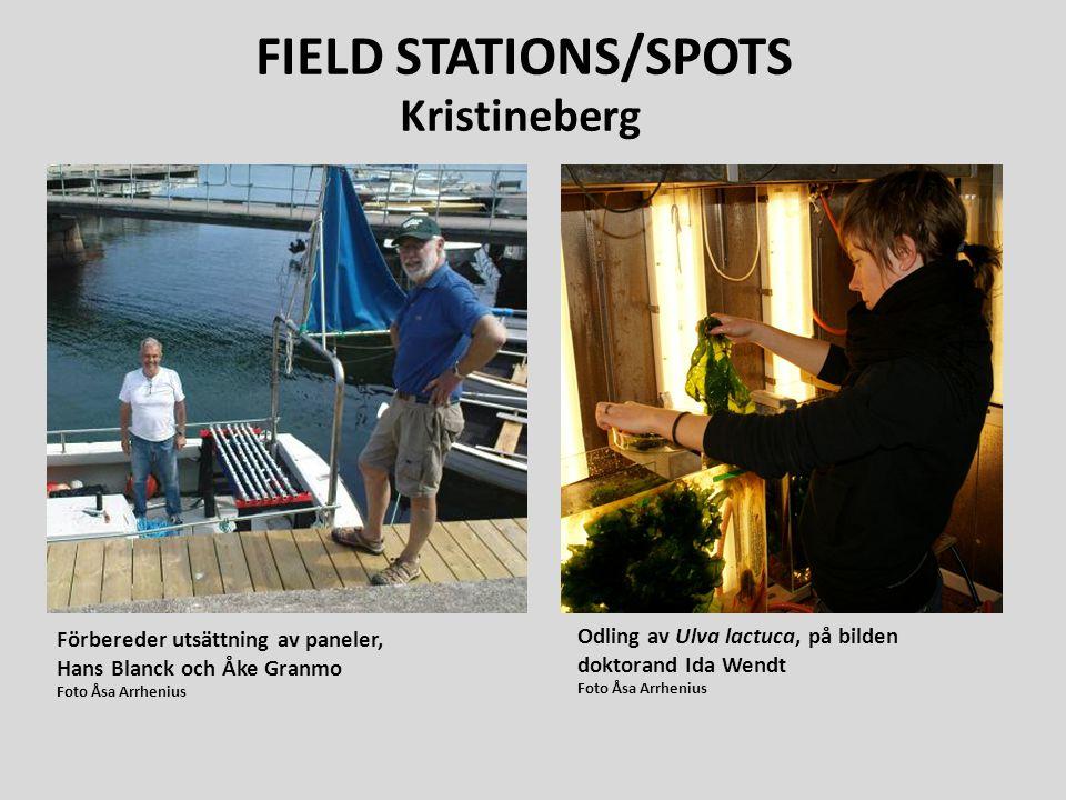 Förbereder utsättning av paneler, Hans Blanck och Åke Granmo Foto Åsa Arrhenius Odling av Ulva lactuca, på bilden doktorand Ida Wendt Foto Åsa Arrheni