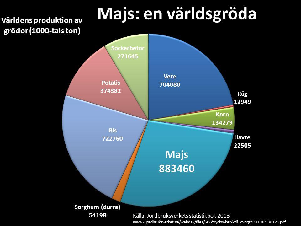 Majs: en världsgröda Källa: Jordbruksverkets statistikbok 2013 www2.jordbruksverket.se/webdav/files/SJV/trycksaker/Pdf_ovrigt/JO01BR1301v3.pdf
