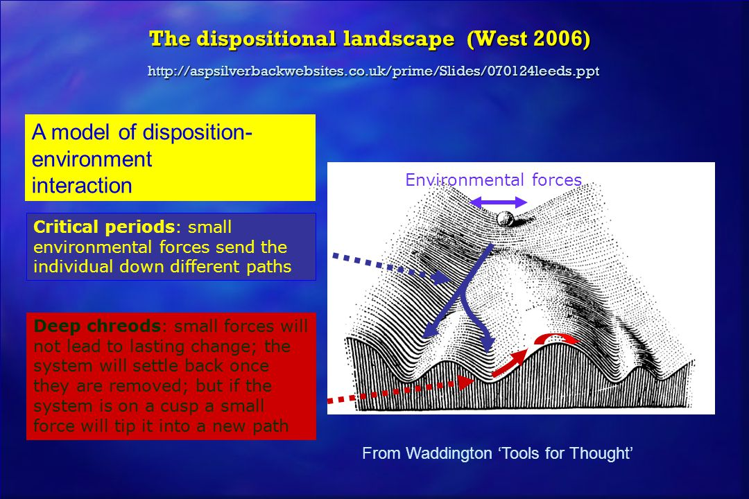 The dispositional landscape (West 2006) http://aspsilverbackwebsites.co.uk/prime/Slides/070124leeds.ppt Critical periods: small environmental forces s