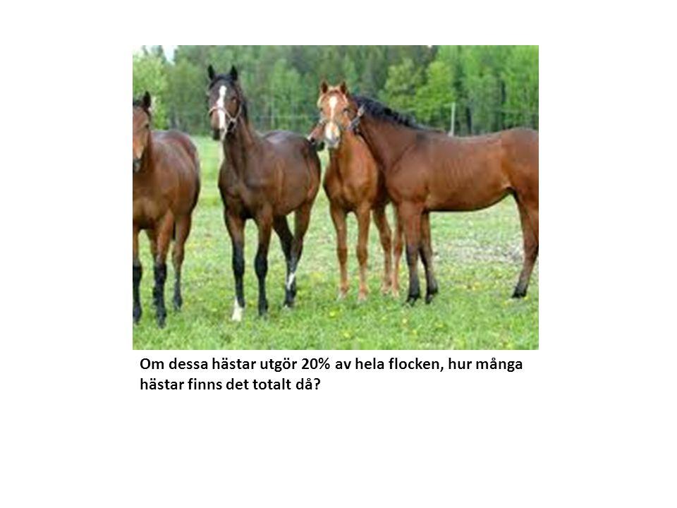 Om dessa hästar utgör 20% av hela flocken, hur många hästar finns det totalt då?