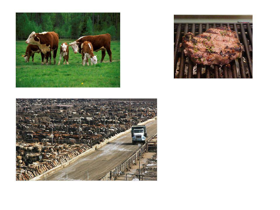 Frågan är inte enkel Vi ska minska köttkonsumtionen – men hur.