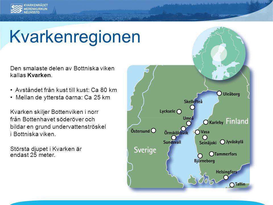 Den smalaste delen av Bottniska viken kallas Kvarken. • Avståndet från kust till kust: Ca 80 km • Mellan de yttersta öarna: Ca 25 km Kvarken skiljer B