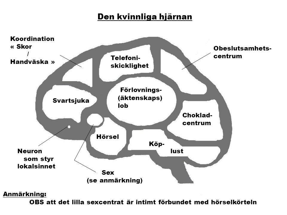 Den kvinnliga hjärnan Telefoni- skicklighet Obeslutsamhets- centrum Förlovnings- (äktenskaps) lob Koordination « Skor / Handväska » Svartsjuka Neuron som styr lokalsinnet Choklad- centrum Hörsel Sex (se anmärkning) Köp- lust Anmärkning: OBS att det lilla sexcentrat är intimt förbundet med hörselkörteln