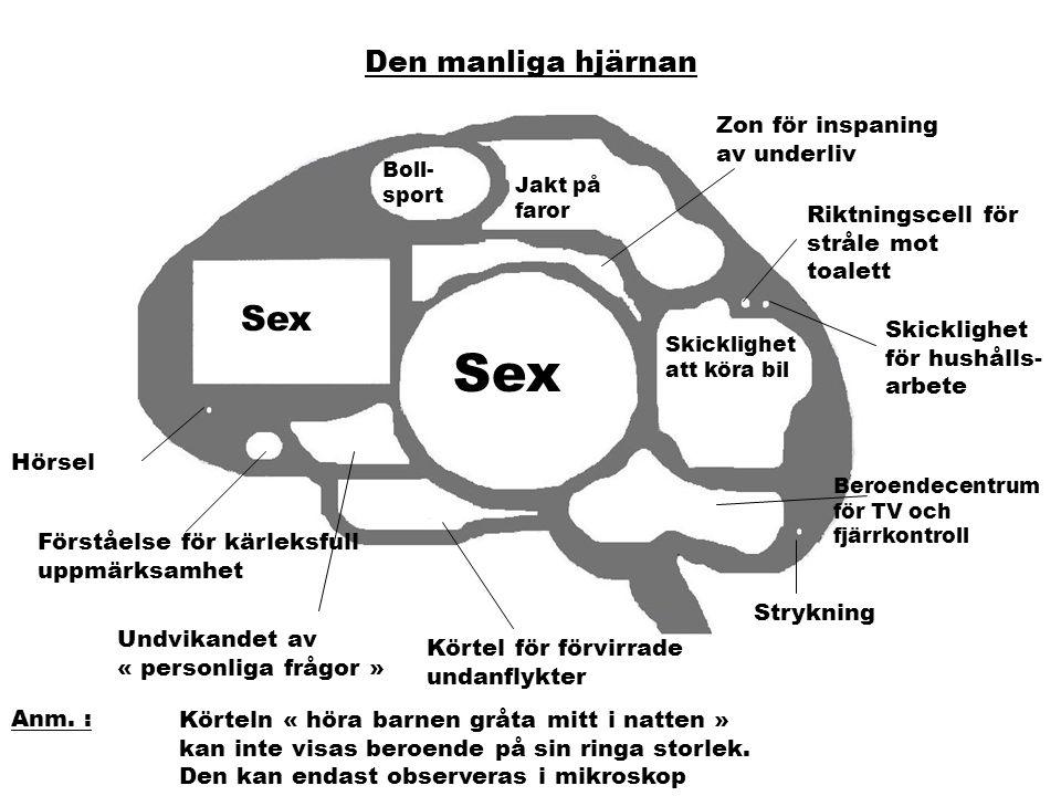 Den kvinnliga hjärnan Telefoni- skicklighet Obeslutsamhets- centrum Förlovnings- (äktenskaps) lob Koordination « Skor / Handväska » Svartsjuka Neuron