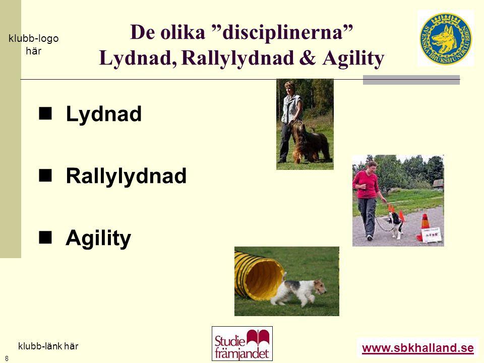 """www.sbkhalland.se klubb-logo här klubb-länk här 8 De olika """"disciplinerna"""" Lydnad, Rallylydnad & Agility  Lydnad  Rallylydnad  Agility"""