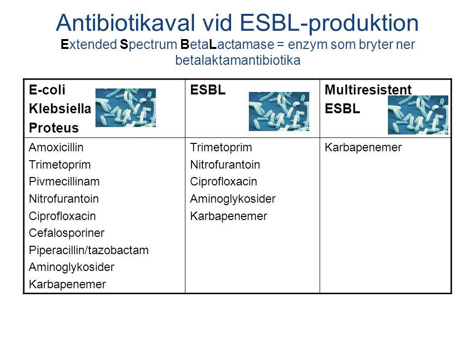 E-coli Klebsiella Proteus ESBLMultiresistent ESBL Amoxicillin Trimetoprim Pivmecillinam Nitrofurantoin Ciprofloxacin Cefalosporiner Piperacillin/tazobactam Aminoglykosider Karbapenemer Trimetoprim Nitrofurantoin Ciprofloxacin Aminoglykosider Karbapenemer Antibiotikaval vid ESBL-produktion Extended Spectrum BetaLactamase = enzym som bryter ner betalaktamantibiotika