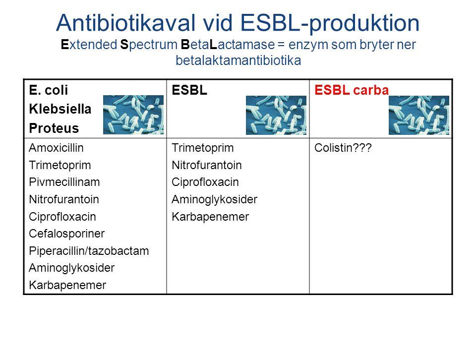 E. coli Klebsiella Proteus ESBLESBL carba Amoxicillin Trimetoprim Pivmecillinam Nitrofurantoin Ciprofloxacin Cefalosporiner Piperacillin/tazobactam Am
