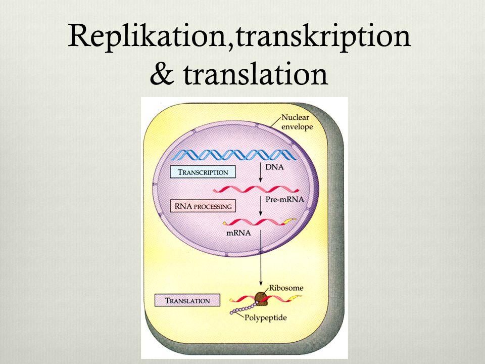 Replikation,transkription & translation