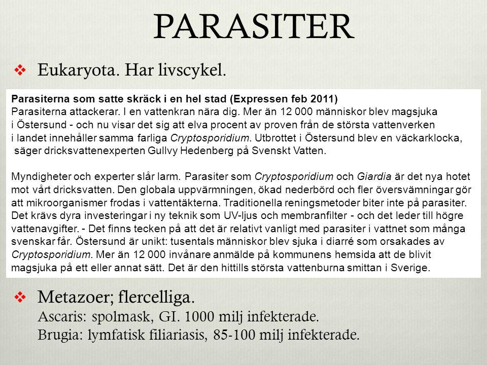 PARASITER  Eukaryota.Har livscykel.  Protozoer; encelliga.