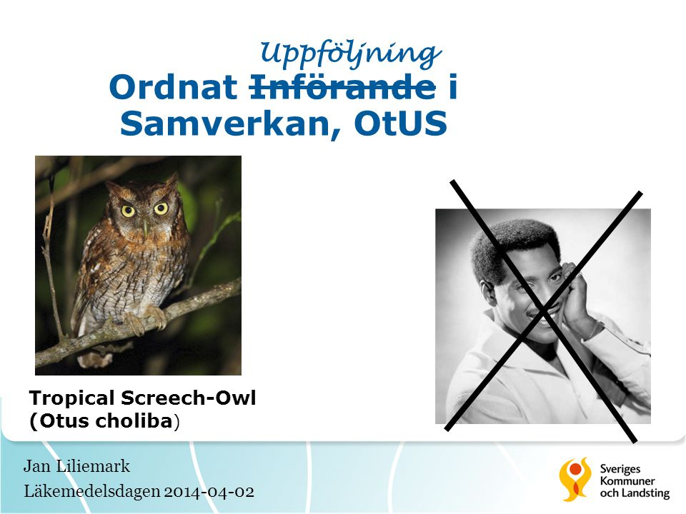 Jan Liliemark Läkemedelsdagen 2014-04-02 Uppföljning Ordnat Införande i Samverkan, OtUS Tropical Screech-Owl (Otus choliba )
