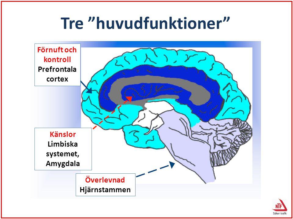 """Förnuft och kontroll Prefrontala cortex Känslor Limbiska systemet, Amygdala Överlevnad Hjärnstammen Tre """"huvudfunktioner"""""""