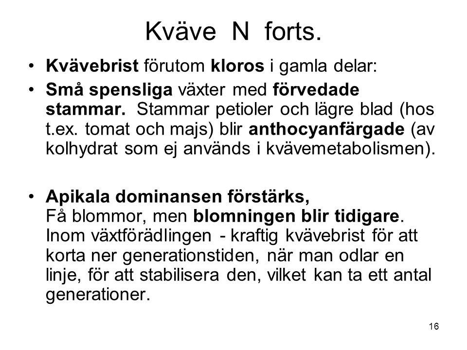 16 Kväve N forts. •Kvävebrist förutom kloros i gamla delar: •Små spensliga växter med förvedade stammar. Stammar petioler och lägre blad (hos t.ex. to