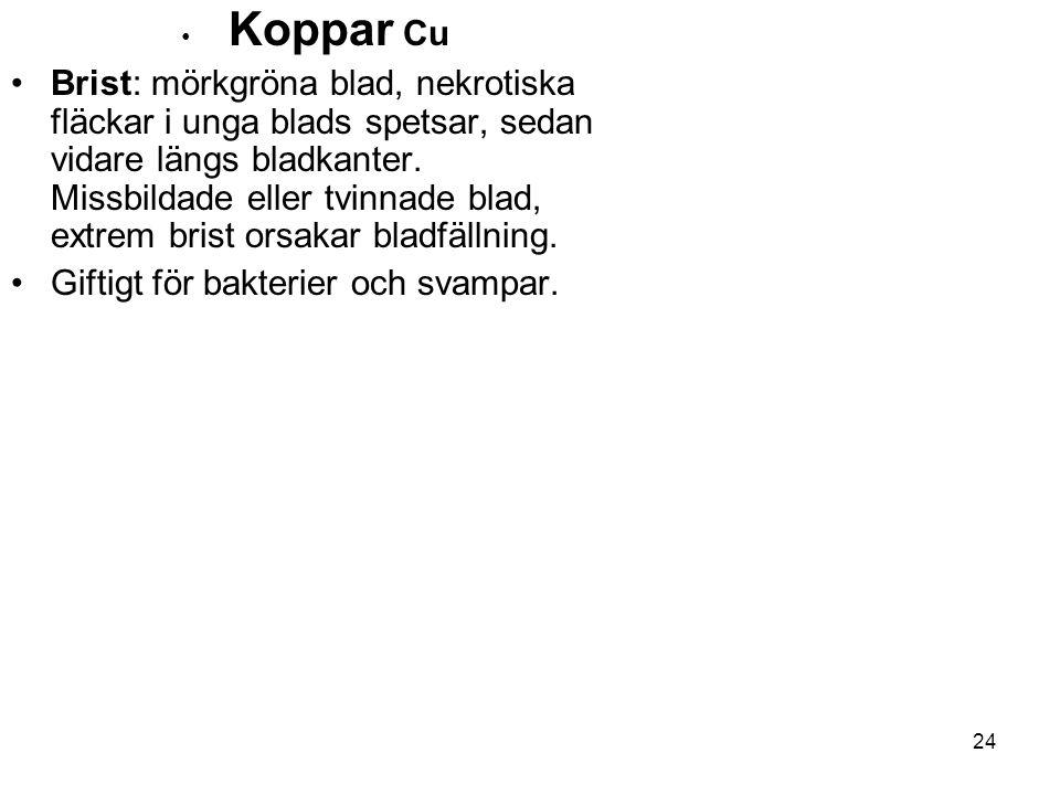 24 • Koppar Cu •Brist: mörkgröna blad, nekrotiska fläckar i unga blads spetsar, sedan vidare längs bladkanter. Missbildade eller tvinnade blad, extrem