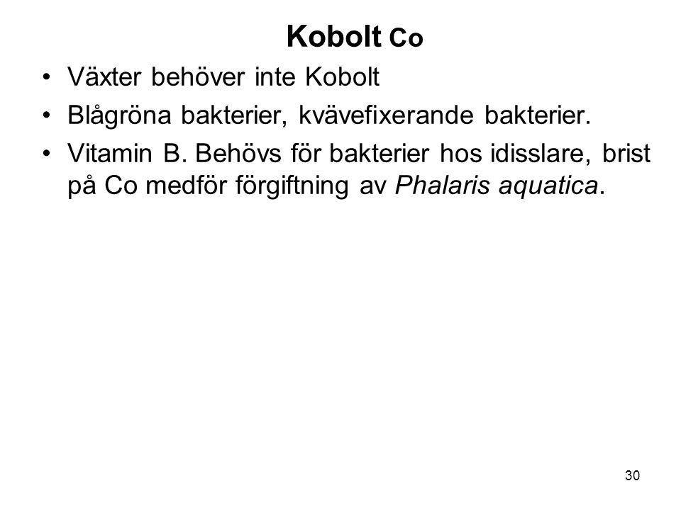 30 Kobolt Co •Växter behöver inte Kobolt •Blågröna bakterier, kvävefixerande bakterier. •Vitamin B. Behövs för bakterier hos idisslare, brist på Co me