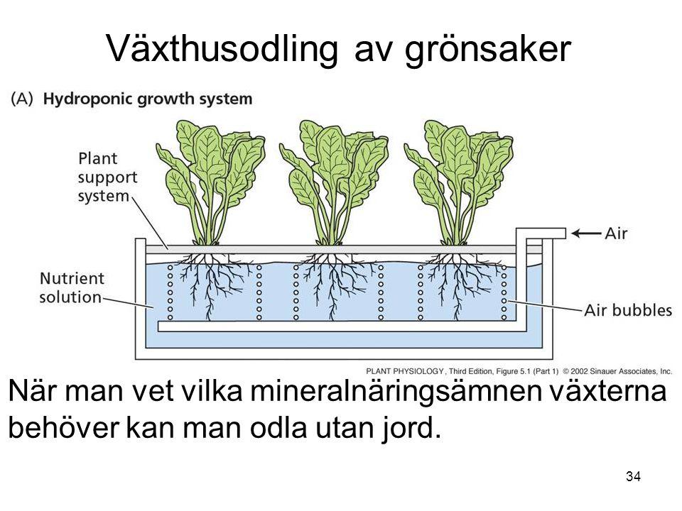 34 Växthusodling av grönsaker När man vet vilka mineralnäringsämnen växterna behöver kan man odla utan jord.