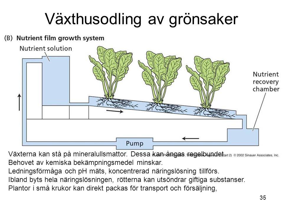35 Växthusodling av grönsaker Växterna kan stå på mineralullsmattor. Dessa kan ångas regelbundet. Behovet av kemiska bekämpningsmedel minskar. Ledning