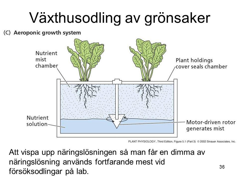 36 Växthusodling av grönsaker Att vispa upp näringslösningen så man får en dimma av näringslösning används fortfarande mest vid försöksodlingar på lab