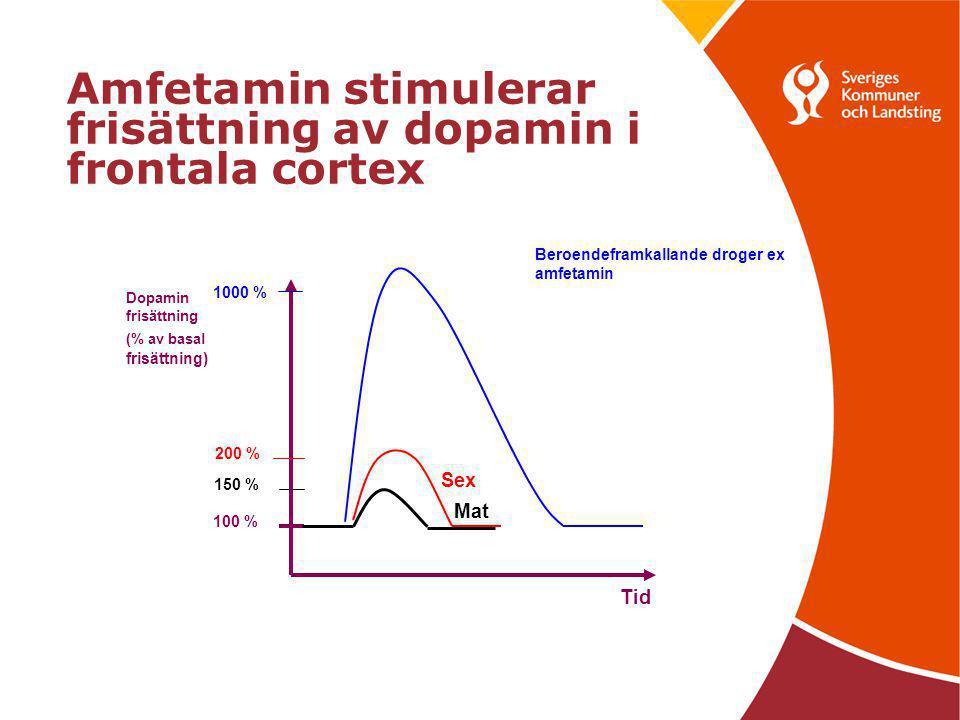 Amfetamin stimulerar frisättning av dopamin i frontala cortex Tid Dopamin frisättning (% av basal frisättning) 100 % 1000 % 200 % Sex 150 % Mat Beroen