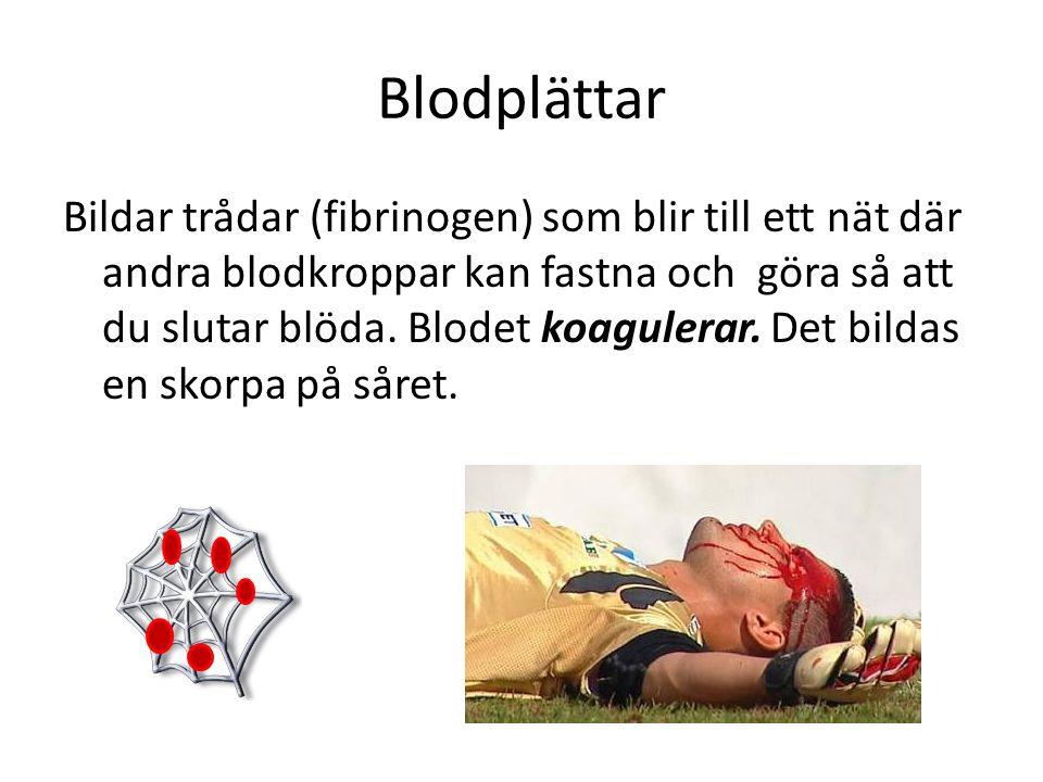 Blodplättar Bildar trådar (fibrinogen) som blir till ett nät där andra blodkroppar kan fastna och göra så att du slutar blöda. Blodet koagulerar. Det
