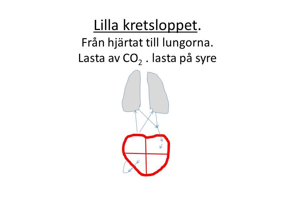 Lilla kretsloppet. Från hjärtat till lungorna. Lasta av CO 2. lasta på syre