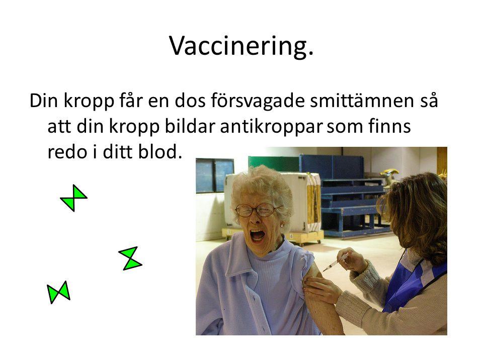 Vaccinering. Din kropp får en dos försvagade smittämnen så att din kropp bildar antikroppar som finns redo i ditt blod.