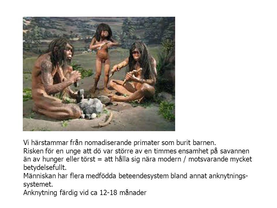 Vi härstammar från nomadiserande primater som burit barnen.