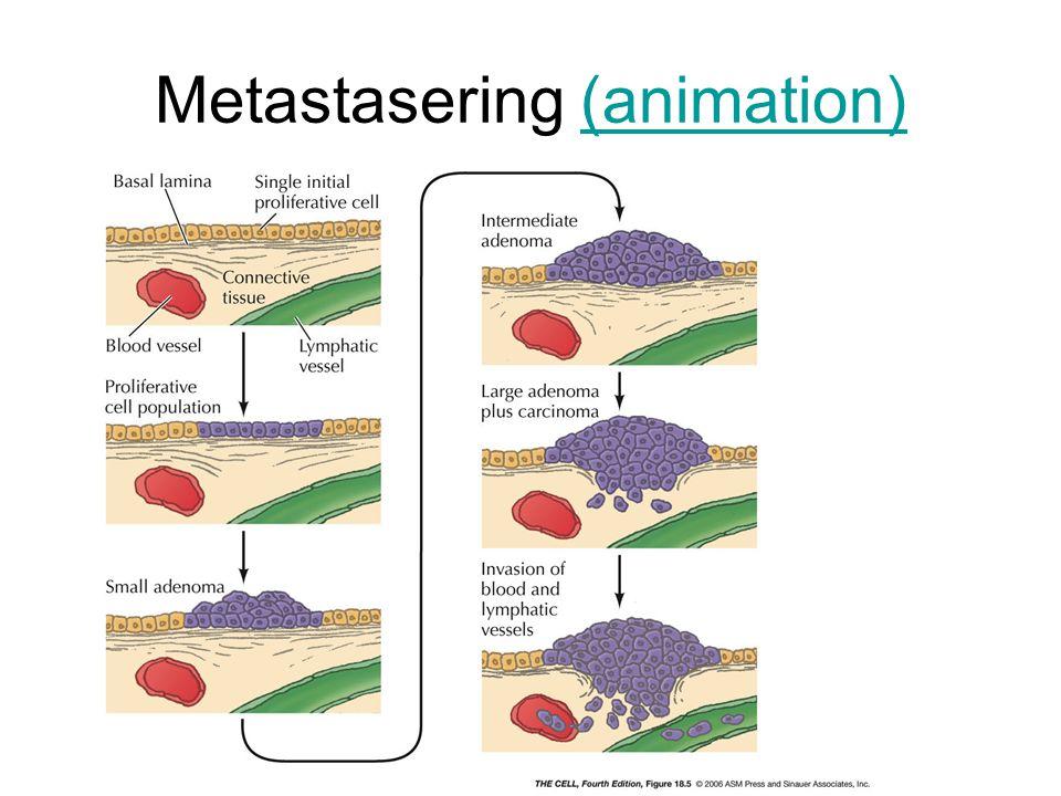 Metastasering (animation)(animation)