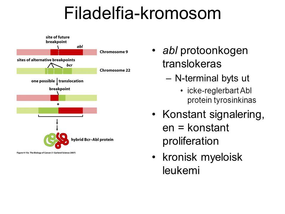 Filadelfia-kromosom •abl protoonkogen translokeras –N-terminal byts ut •icke-reglerbart Abl protein tyrosinkinas •Konstant signalering, en = konstant