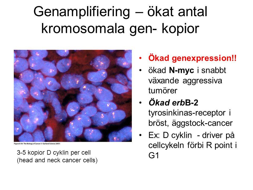 Genamplifiering – ökat antal kromosomala gen- kopior •Ökad genexpression!! •ökad N-myc i snabbt växande aggressiva tumörer •Ökad erbB-2 tyrosinkinas-r