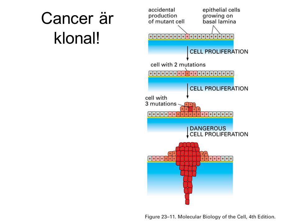 Cancer är klonal!