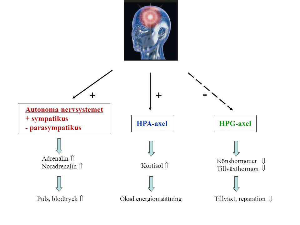 Autonoma nervsystemet + sympatikus - parasympatikus HPA-axel Adrenalin  Noradrenalin  Kortisol  Ökad energiomsättning Puls, blodtryck  HPG-axel Könshormoner Tillväxthormon Tillväxt, reparation ++ -   
