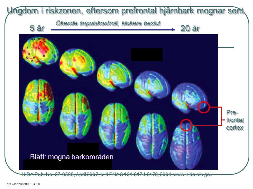 NIDA Pub. No. 07-6505, April 2007, bild PNAS 101:8174-8179, 2004; www.nida.nih.gov Pre-frontalcortexPre-frontalcortex Ungdom i riskzonen, eftersom pre