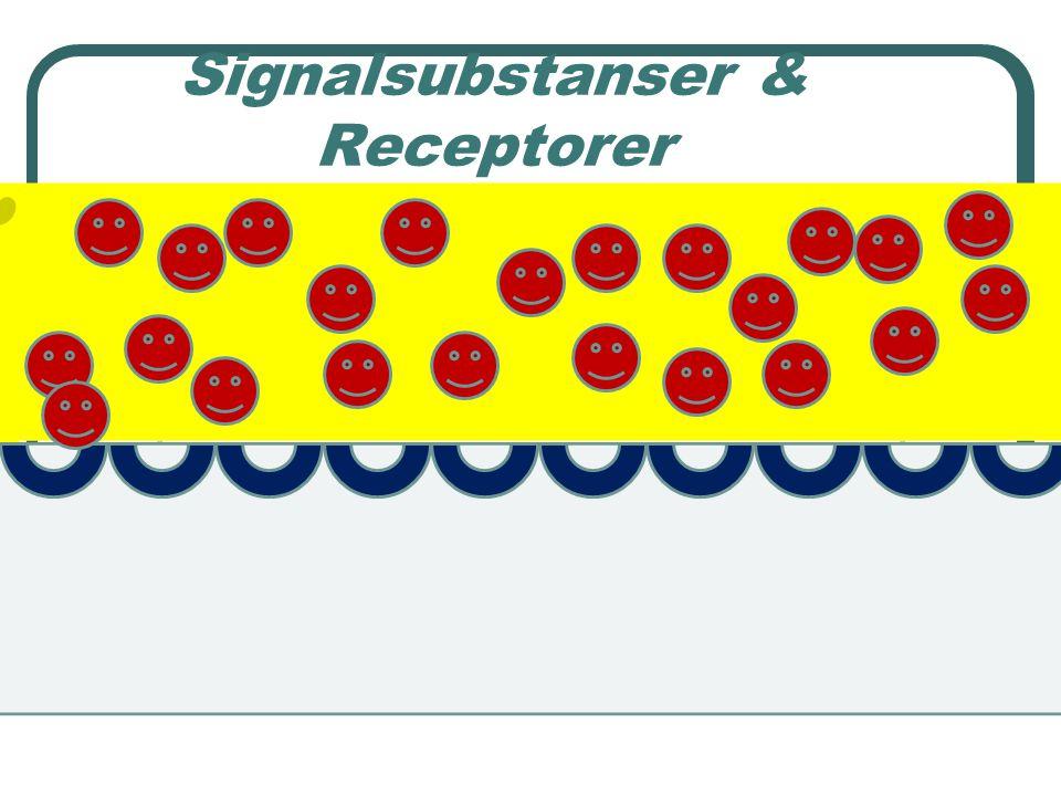 Normal balans ca 50% av receptorerna aktiverade