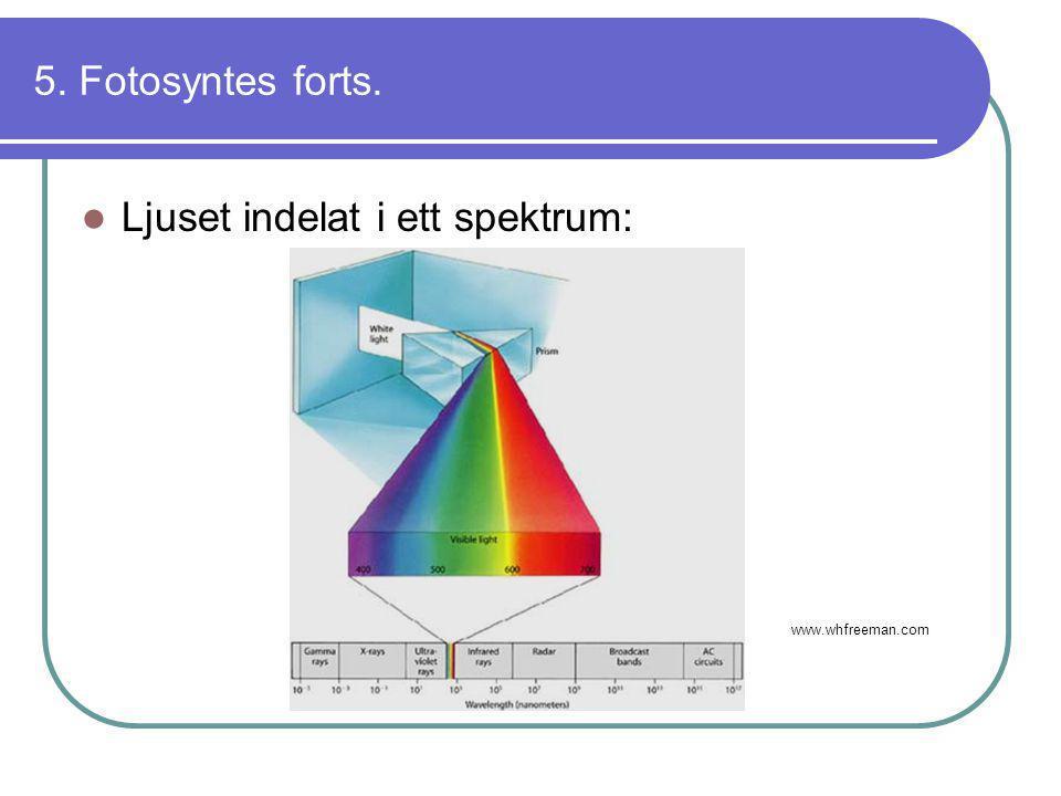5. Fotosyntes forts.  Ljuset indelat i ett spektrum: www.whfreeman.com