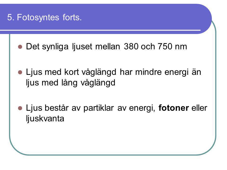 5. Fotosyntes forts.  Det synliga ljuset mellan 380 och 750 nm  Ljus med kort våglängd har mindre energi än ljus med lång våglängd  Ljus består av