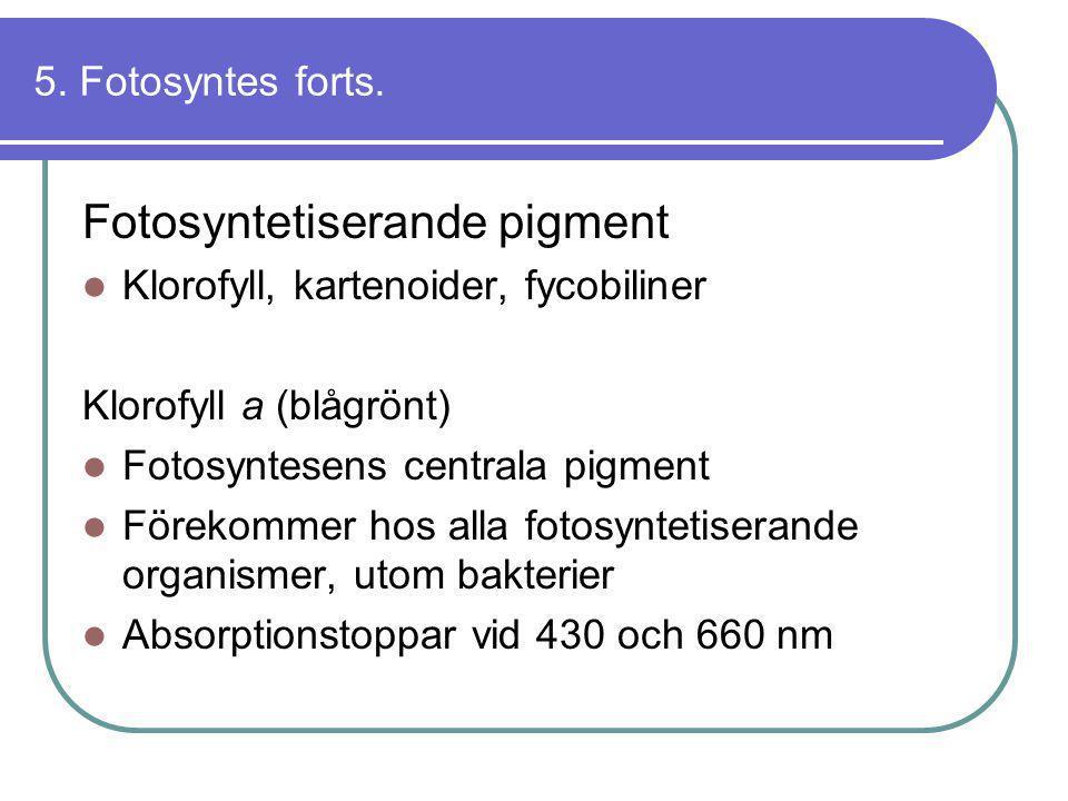 5. Fotosyntes forts. Fotosyntetiserande pigment  Klorofyll, kartenoider, fycobiliner Klorofyll a (blågrönt)  Fotosyntesens centrala pigment  Föreko