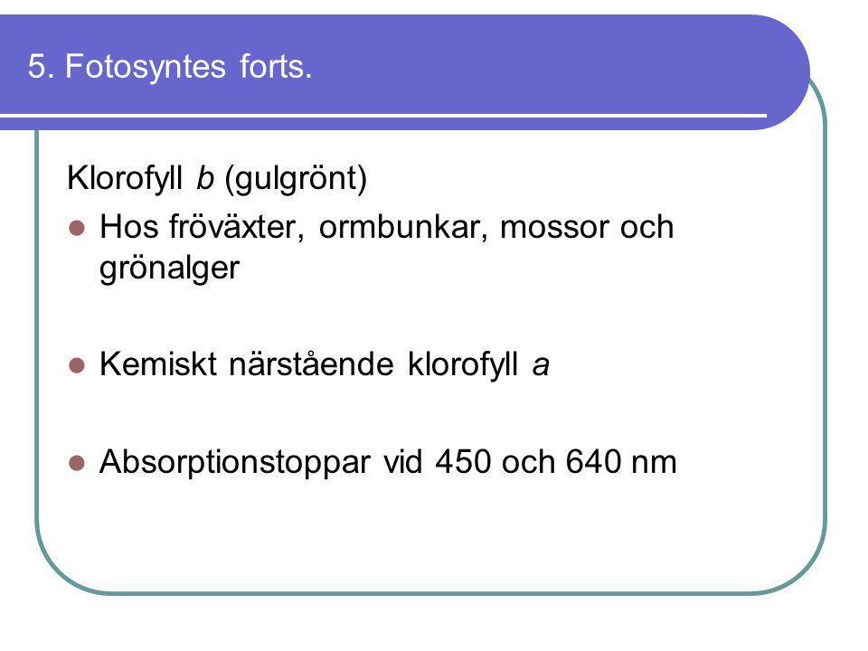 5. Fotosyntes forts. Klorofyll b (gulgrönt)  Hos fröväxter, ormbunkar, mossor och grönalger  Kemiskt närstående klorofyll a  Absorptionstoppar vid