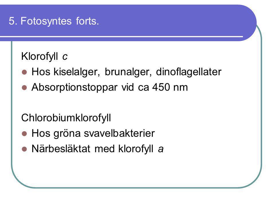 5. Fotosyntes forts. Klorofyll c  Hos kiselalger, brunalger, dinoflagellater  Absorptionstoppar vid ca 450 nm Chlorobiumklorofyll  Hos gröna svavel