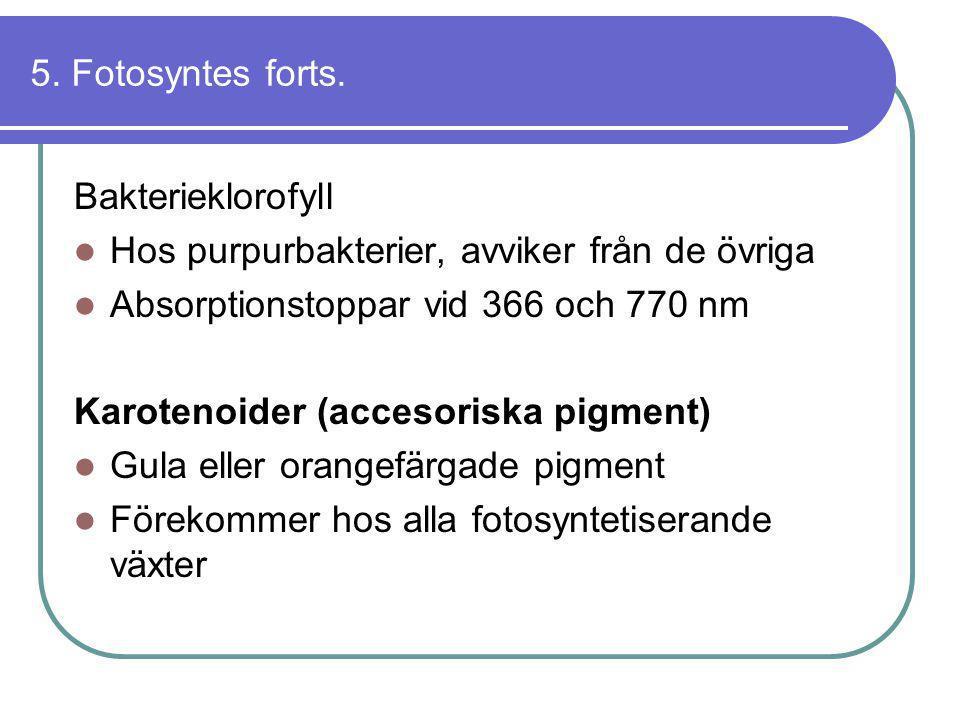5. Fotosyntes forts. Bakterieklorofyll  Hos purpurbakterier, avviker från de övriga  Absorptionstoppar vid 366 och 770 nm Karotenoider (accesoriska