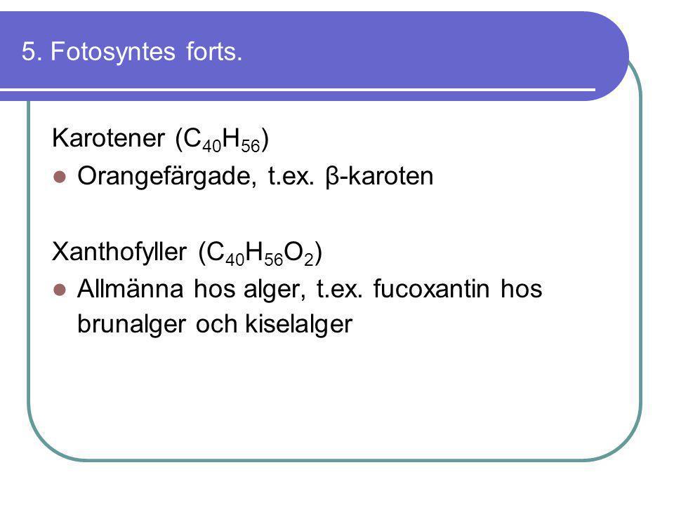 5. Fotosyntes forts. Karotener (C 40 H 56 )  Orangefärgade, t.ex. β-karoten Xanthofyller (C 40 H 56 O 2 )  Allmänna hos alger, t.ex. fucoxantin hos