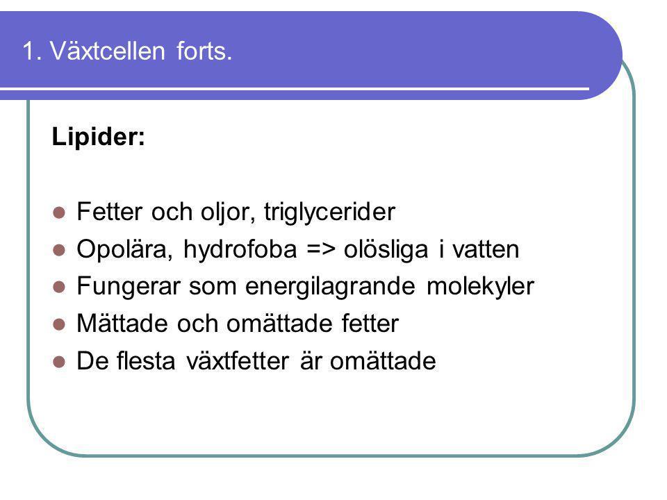 1. Växtcellen forts. Lipider:  Fetter och oljor, triglycerider  Opolära, hydrofoba => olösliga i vatten  Fungerar som energilagrande molekyler  Mä