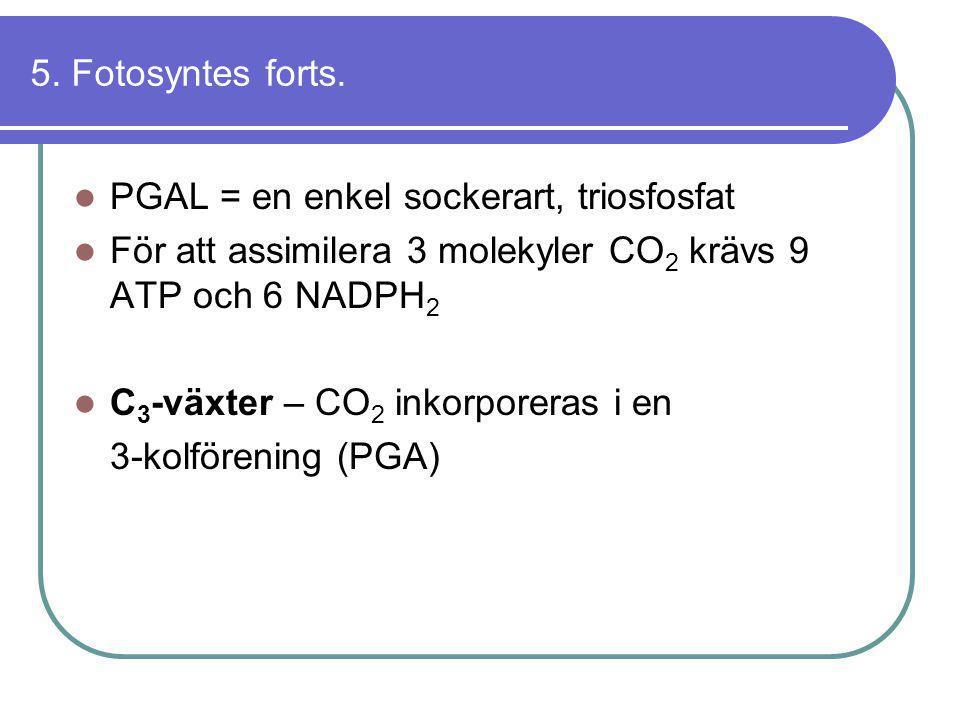 5. Fotosyntes forts.  PGAL = en enkel sockerart, triosfosfat  För att assimilera 3 molekyler CO 2 krävs 9 ATP och 6 NADPH 2  C 3 -växter – CO 2 ink
