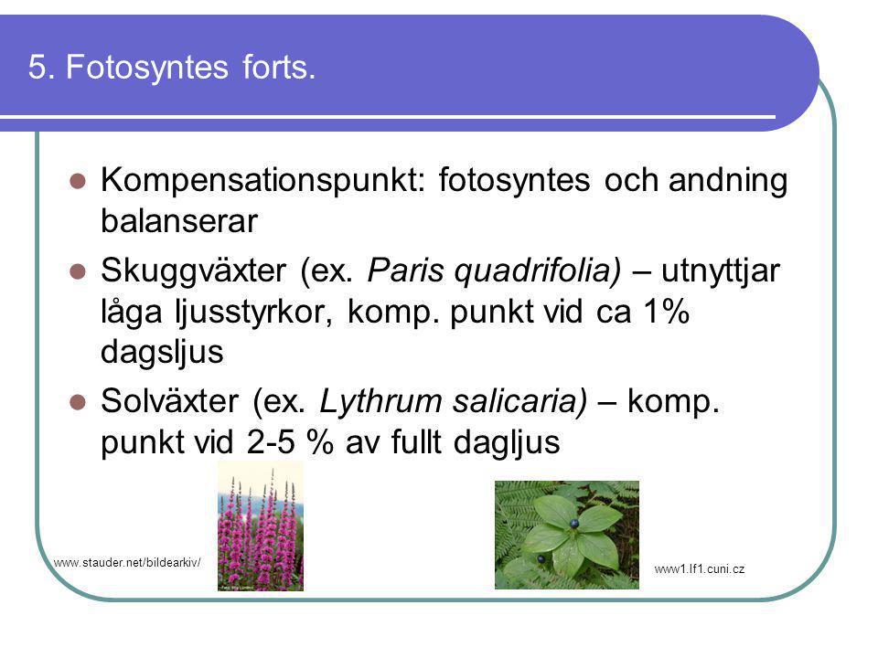5. Fotosyntes forts.  Kompensationspunkt: fotosyntes och andning balanserar  Skuggväxter (ex. Paris quadrifolia) – utnyttjar låga ljusstyrkor, komp.